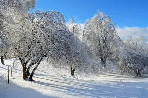 www.kathynick.com_Winter Wonderland